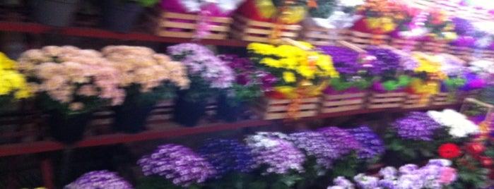 Mercado de Flores is one of ¡Cui Cui ha estado aquí!.
