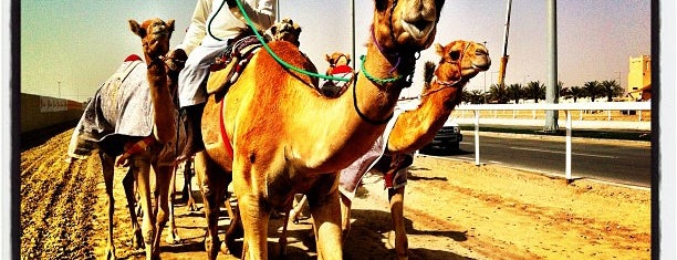Al Shahaniyah Camel Race Track is one of Sports Arena's.