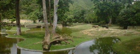 Parque Zoológico Caricuao is one of Caracas must.