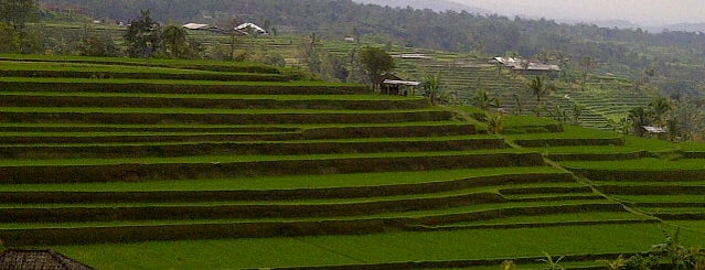 Jatiluwih Rice Field is one of Bali for The World #4sqCities.