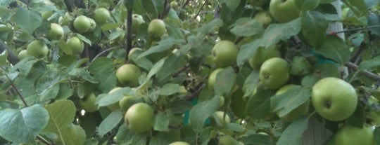 BYU-I Apple Orchard is one of Things to do while in Rexburg.