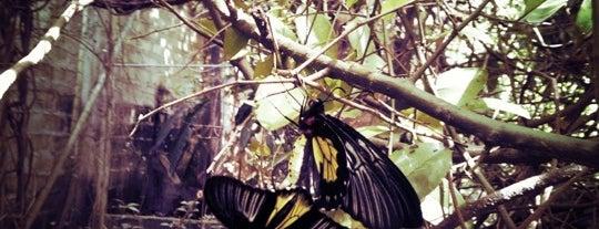 Jumalon Butterfly Sanctuary is one of Certified Cebu.