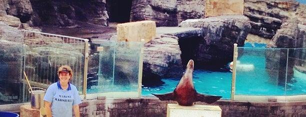 Long Island Aquarium & Exhibition Center (Atlantis Marine World) is one of * Spots *.