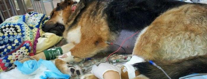 Capital City Animal Hospital is one of Veterinary Clinics Across Western Canada.