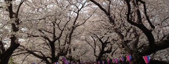 権現堂桜堤 is one of 景色◎.