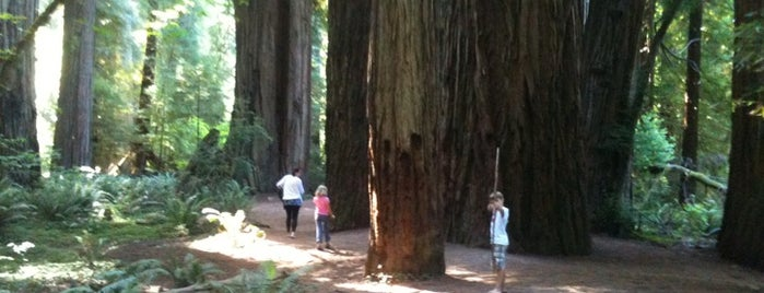 Redwood National Park is one of Visit the National Parks.