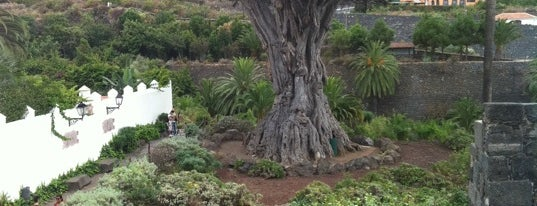 Parque del Drago is one of Tenerife.