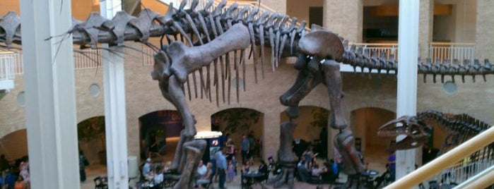 Fernbank Museum of Natural History is one of Places to Visit in Atlanta, GA.
