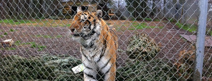 Carolina Tiger Rescue is one of Raleigh Favorites.