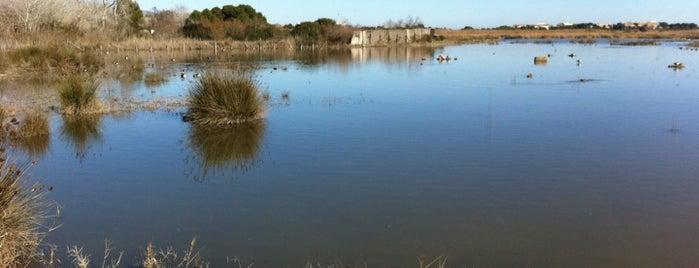 Aguait del Ras is one of Mallorca Birdwatching/Ornithology.