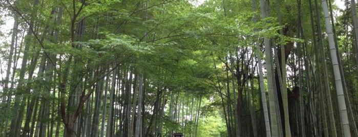 Bokunenjin is one of 兎に角ラーメン食べる.