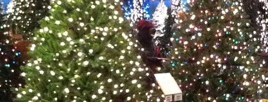 Robert's Christmas Wonderland is one of Shopping.