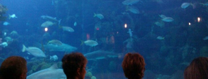 The Florida Aquarium is one of Tampa Attractions.