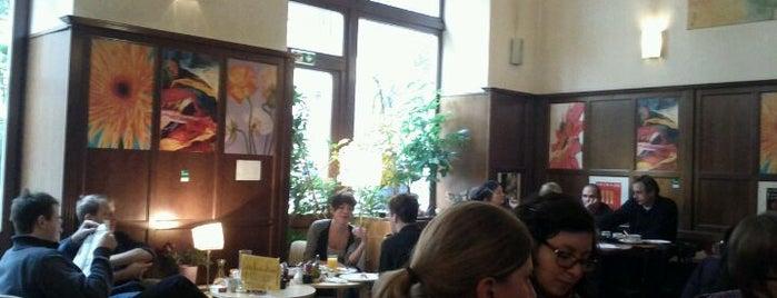Café Merkur is one of StorefrontSticker #4sqCities: Vienna.