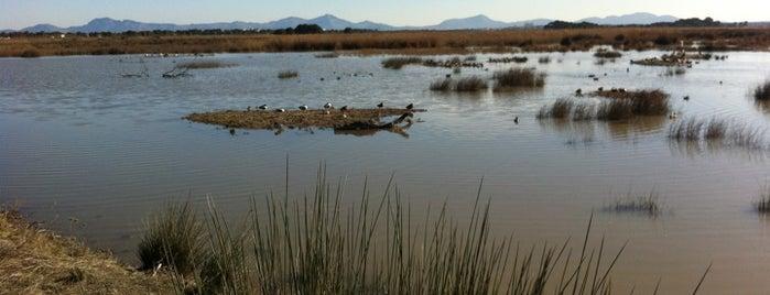 Aguait de sa Roca is one of Mallorca Birdwatching/Ornithology.
