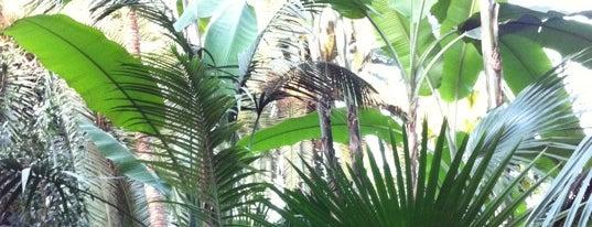 Palmengarten is one of Must-visit Parks & Outdoors in Frankfurt.
