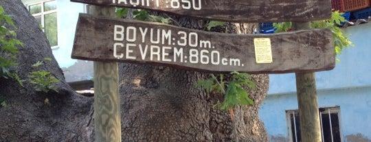 Kızılkeçili is one of doğallık..