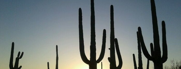 Saguaro National Park is one of How The West Was Won.