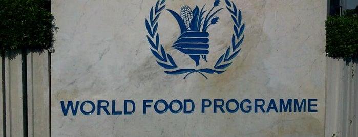 World Food Programme (WFP) is one of conosciuti.