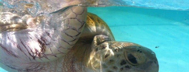 Loggerhead Marinelife Center is one of first.
