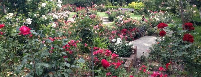 International Rose Test Garden is one of Dan's Portland.