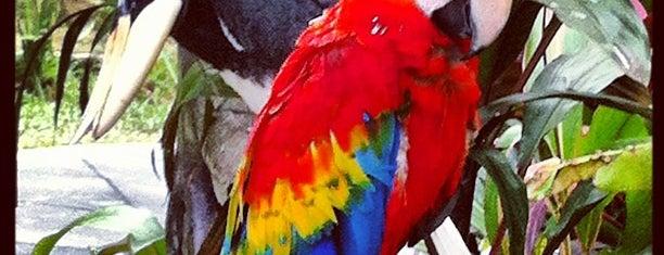 Kuala Lumpur Bird Park is one of jalan-jalan best.