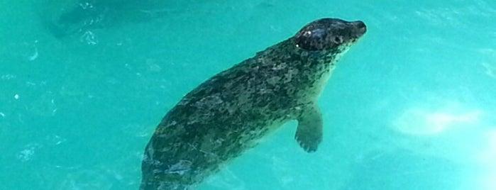 Aquarium of Niagara is one of Niagara Falls Trip.