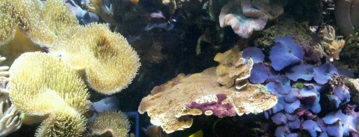 National Sea Life Centre is one of Places that make me happy.