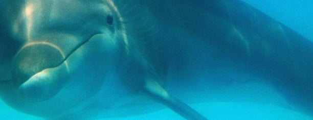 Cabo Dolphins is one of My life in Los Cabos.