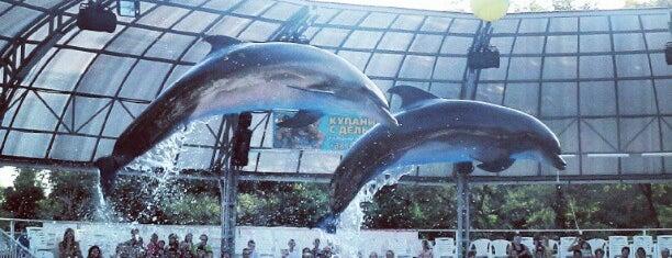 Дельфинарий Немо / Nemo Dolphinarium is one of Одесса.