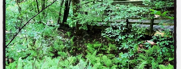 Devil's Millhopper Geological State Park is one of Favorites in Gainesville.