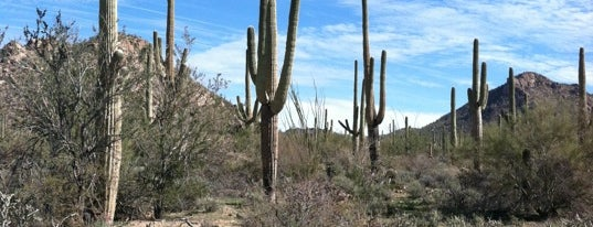 Saguaro National Park West is one of National Parks.