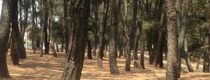 Parque Eca Do Queiros is one of Reto 100 ZMG.