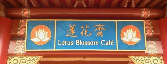 Lotus Blossom Café is one of Walt Disney World - Epcot.