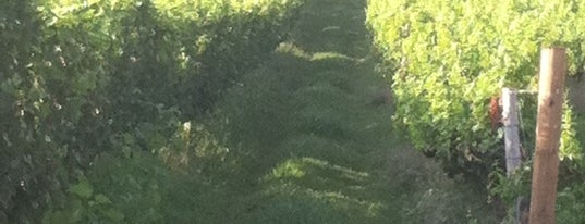 Breaux Vineyards is one of Best DC Wineries According to The Washington Post.