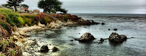 Pacific Grove Recreation Trail is one of Dog-Friendly Monterey Peninsula.