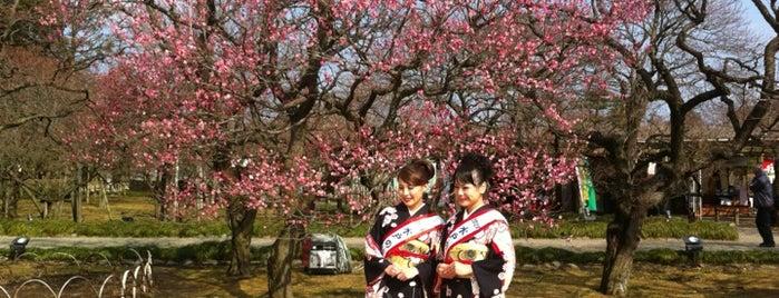 Kairakuen is one of 日本の都市公園100選.