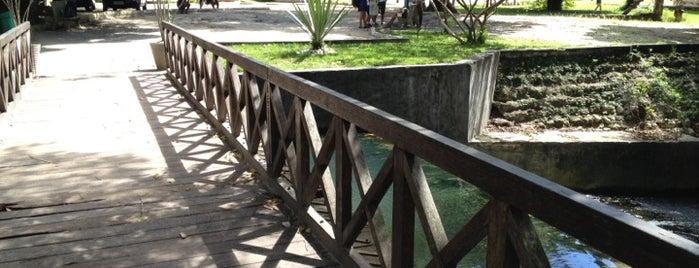 Jardim Botânico Benjamin Maranhão is one of João Pessoa #4sqCities.