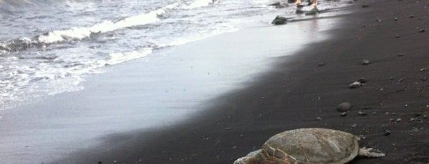 Punalu'u Black Sand Beach is one of chawaii.
