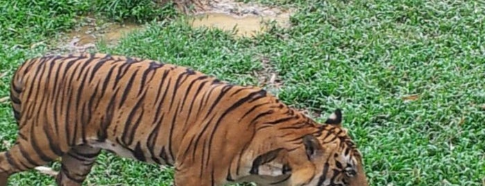Lok Kawi Wildlife Park is one of Go Outdoor, MY #6.
