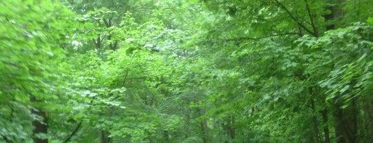 Wildwood Preserve Metropark is one of Favorite Places.