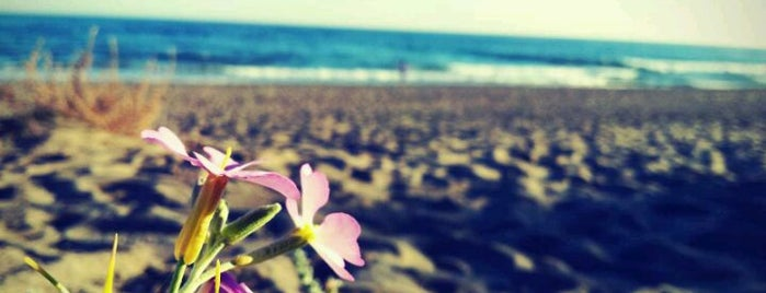 Playa de El Saladillo is one of Alex.