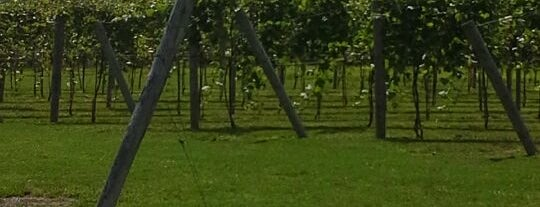 Rushland Ridge Vineyard & Winery is one of Fun.