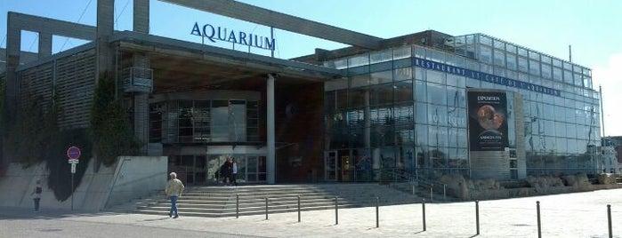 Aquarium de La Rochelle is one of Les immanquables de La Rochelle.