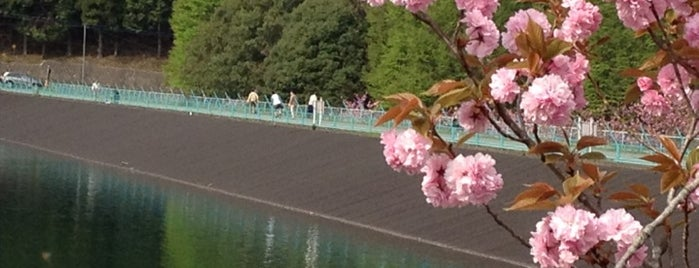 Utsunomiya City Forest Park is one of サイクリング.