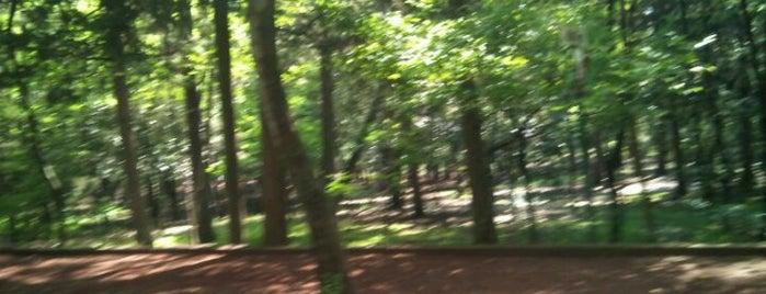 Circuito Bosque de Tlalpan is one of Parques.