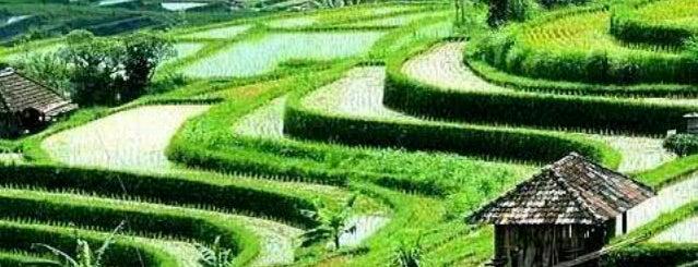 Jatiluwih Rice Field is one of Bali.