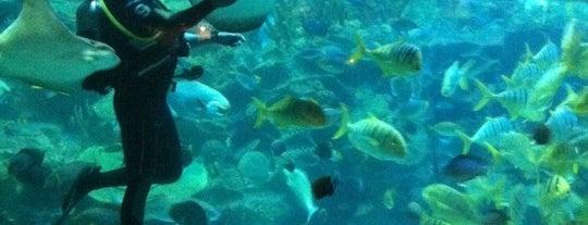 Aquaria KLCC is one of แวะเที่ยว Kuala Lumpur, Malaysia (3).