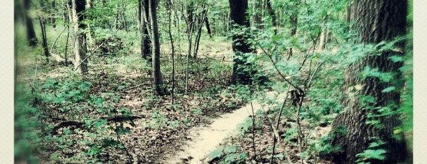 Hartshorne Woods Park (Buttermilk Valley) is one of NJ To Do.