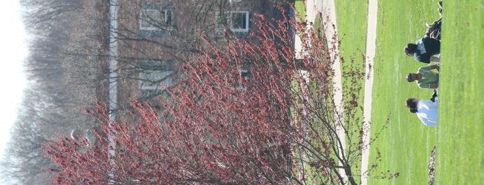 Great Lawn, LIU Post is one of LIU Post Locations.